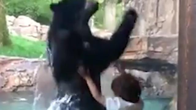 Beer imiteert vijfjarige jongen in dierentuin Nashville