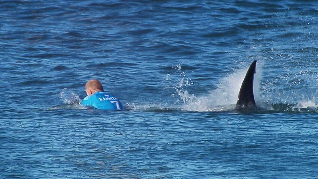 Haai valt surfer aan tijdens surfwedstrijd Zuid-Afrika