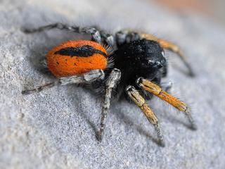 Spin vermoedelijk in Nederland vanwege import van planten