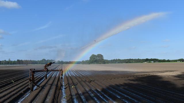 Grasland beregenen met grondwater tijdelijk toegestaan in Brabantse Wal