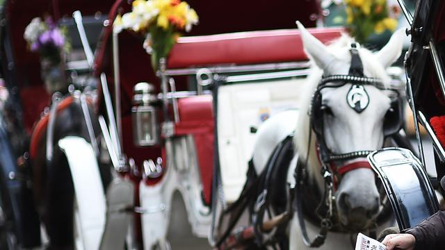 Partij voor de Dieren wil verbod op koetspaarden in Amsterdam