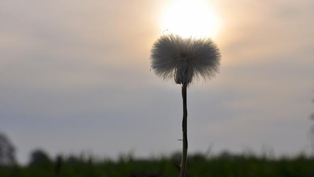 Weerbericht: Geregeld zon, zomers warm en droog