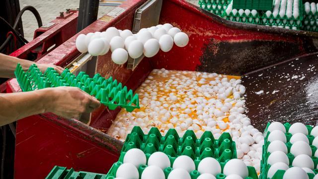 Huiszoekingen in Nederland en België in onderzoek naar fipronil in eieren