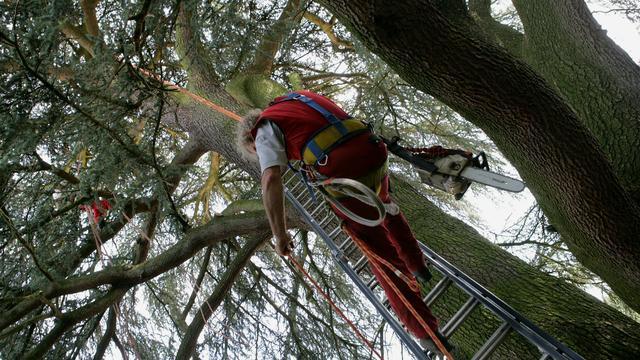 Man aangehouden na wegtrekken van ladder onder boomverzorger
