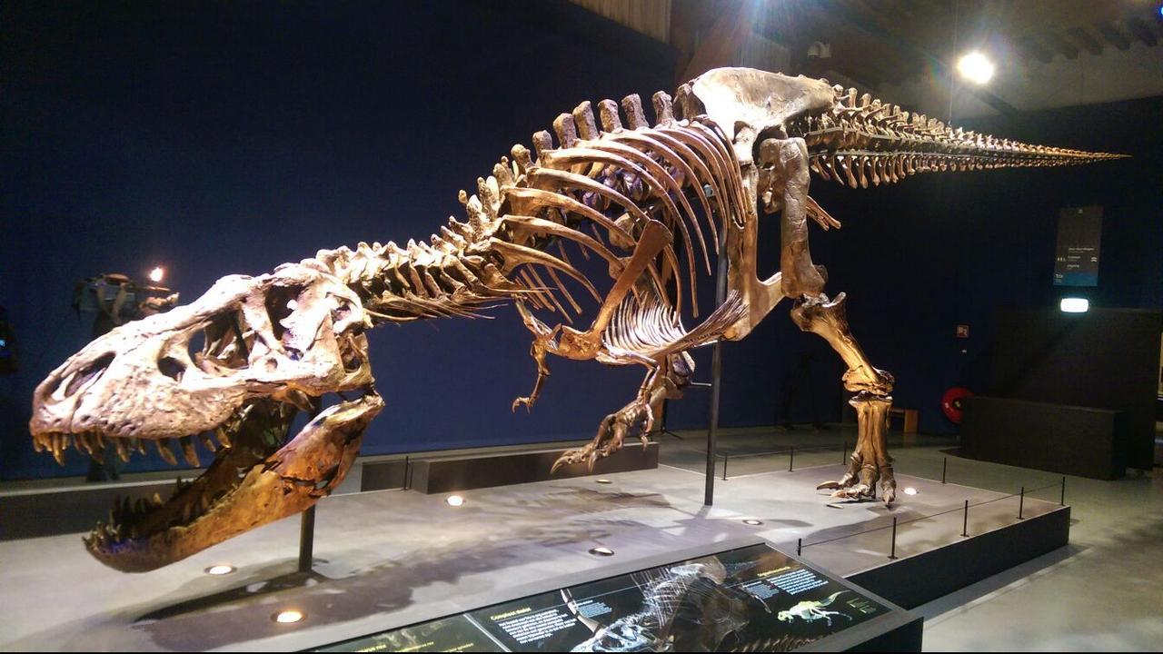 Spiksplinternieuw Tyrannosaurus rex 'Trix' after two years back in Naturalis in MB-01