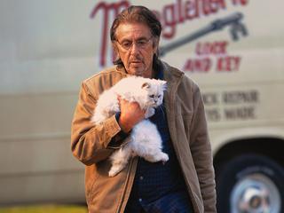 Theater in Eindhoven programmeert films voor huisdieren en hun baasjes
