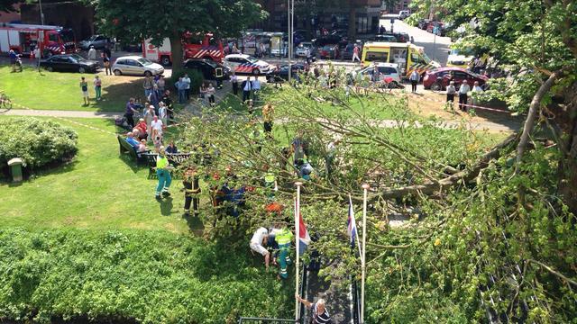 Toeristen gewond door vallende tak in Zutphen