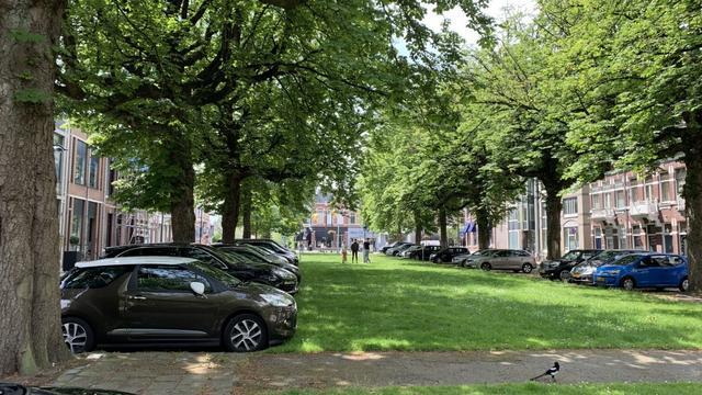 Gemeente vervangt kastanjebomen aan Parkstraat door tulpenbomen