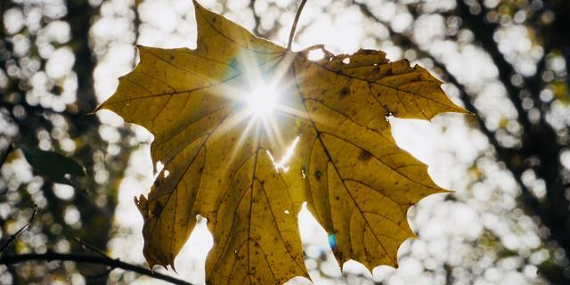 Zo krijg je in de winter genoeg vitamine D binnen