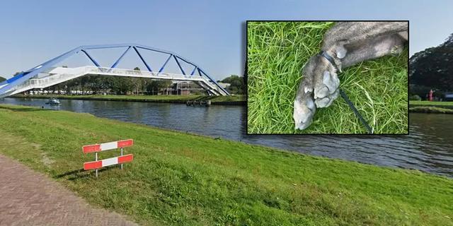 Politie Zwolle achterhaalt eigenaar verdronken hond met vastgebonden poten