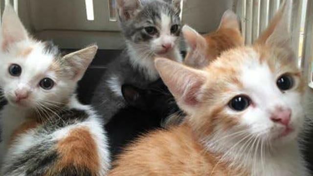 Huisdieren Meldpunt Utrecht vindt op verschillende plekken kittens