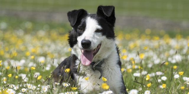 Gebak en massages voor honden: Waarom 'vermenselijken' we huisdieren?