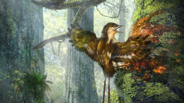 Vleugels van vogels uit tijd van dinosaurussen gevonden