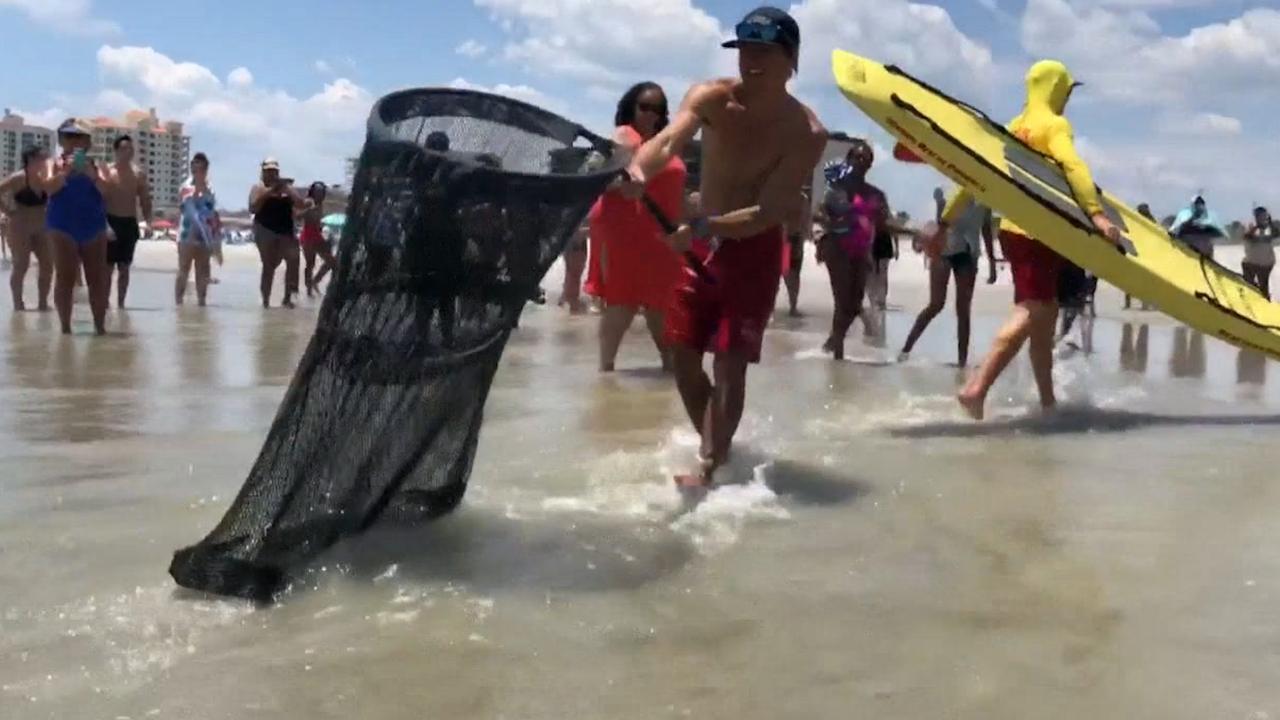 Strandwacht haalt alligator uit de zee in Florida