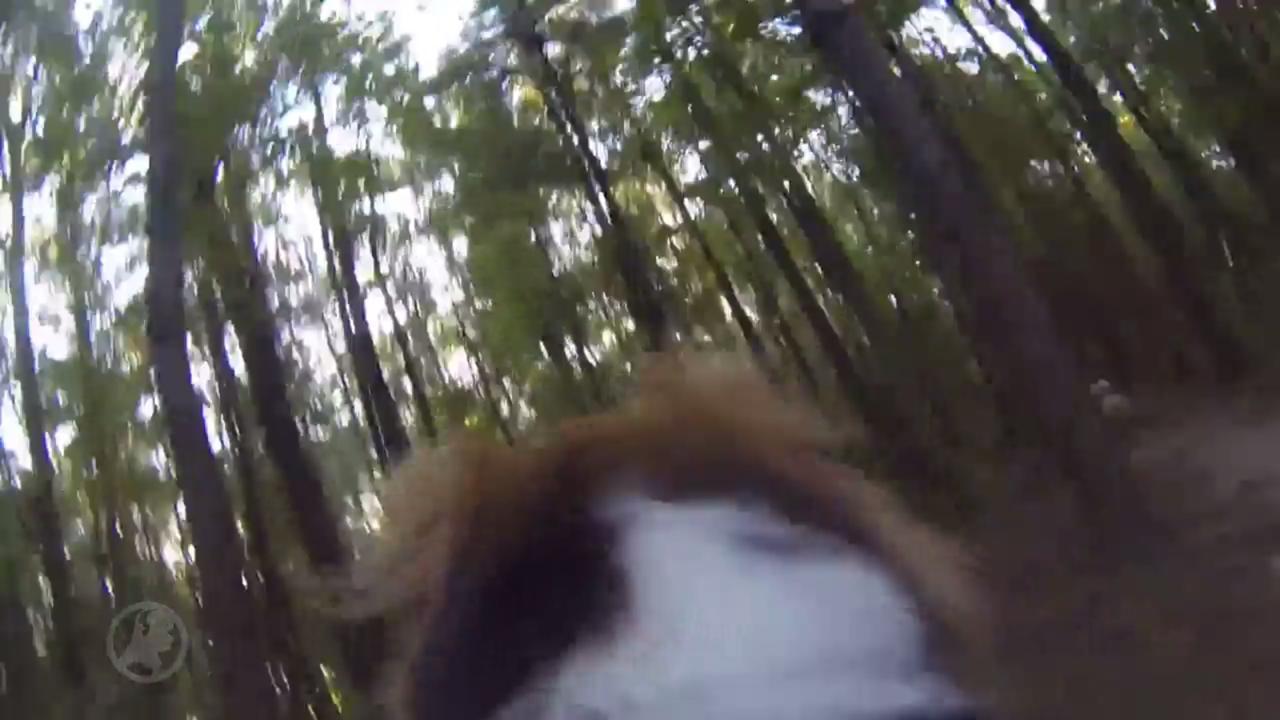 Hond achtervolgt eekhoorn, vindt iets anders