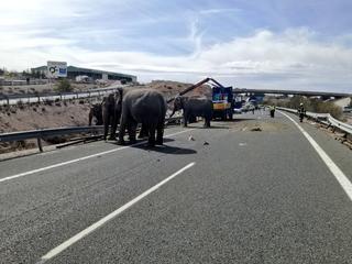 Soortgenoten liepen tijdelijk vrij rond op de snelweg