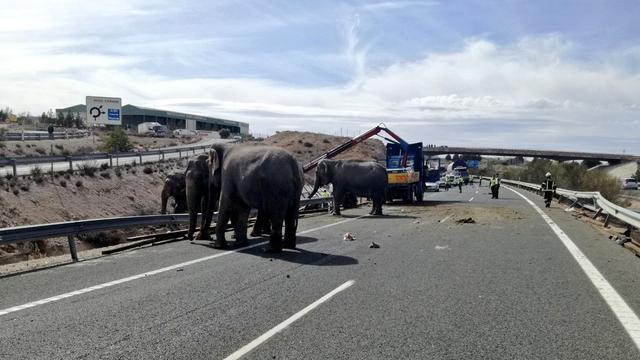 Olifant omgekomen bij ongeval tijdens transport in Spanje