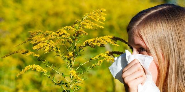 'Graspollenseizoen barst deze week los'