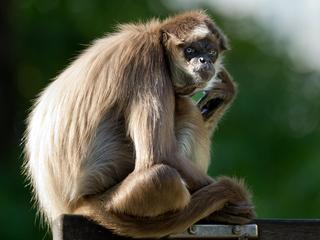 Hoogbejaarde dier leeft al meer dan dertig jaar in voormalige dierentuin