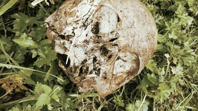 Vrouw vindt menselijke schedel in Sloten