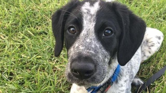 Ontsnapte hond zorgt voor vertragingen op luchthaven
