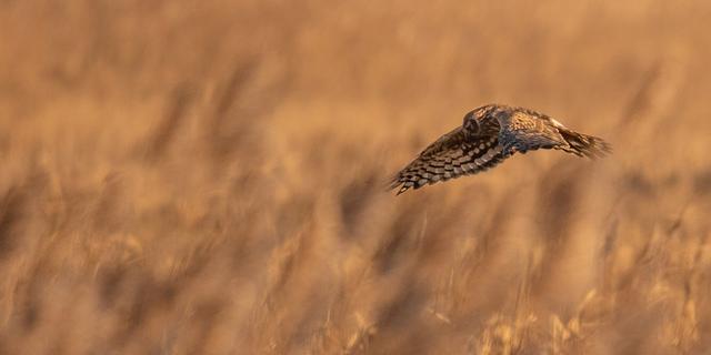 Dierenpopulaties Nederland sinds 1990 gehalveerd, herstel mogelijk
