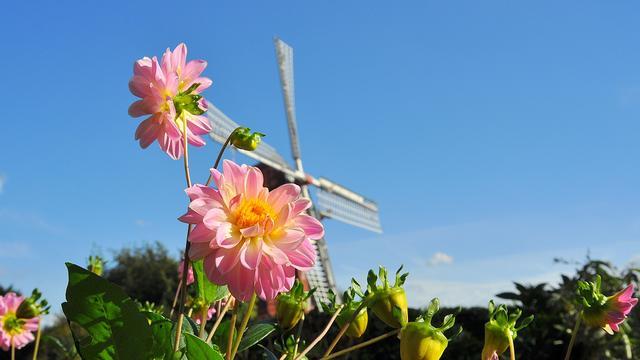 Recordaantal zomerse dagen na bereiken temperatuur van 25 graden in De Bilt