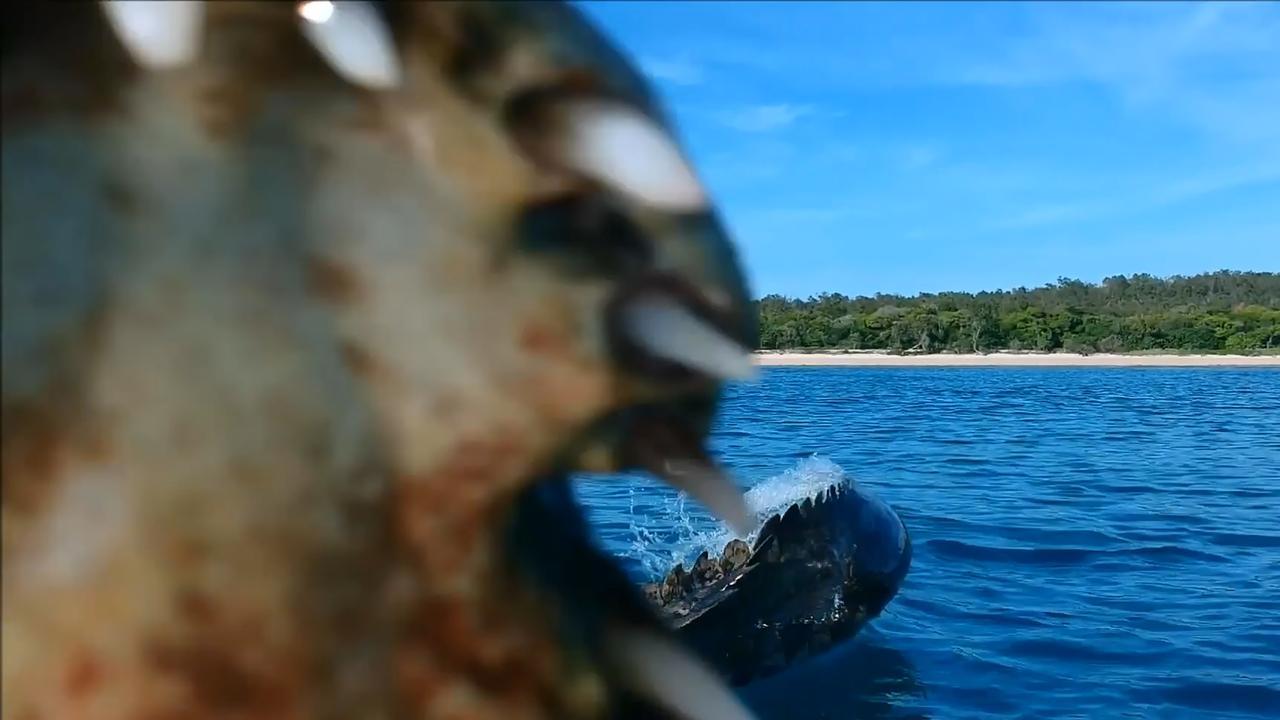 Krokodil probeert drone te grijpen in Australië