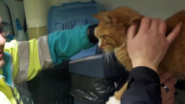 Politie redt kat die weken opgesloten zat op boot in Alphen aan den Rijn