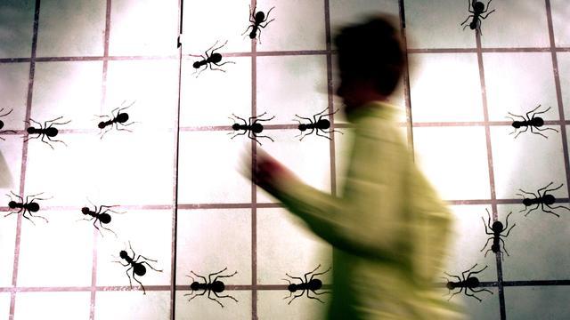 Mieren kunnen hun nest achteruitlopend terugvinden
