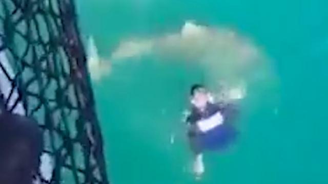 Franse matroos krijgt bezoek van haai na sprong van schip