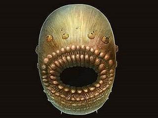 Diertje leefde 540 miljoen jaar geleden
