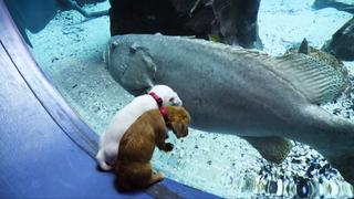 Puppies verkennen gesloten aquarium in Atlanta