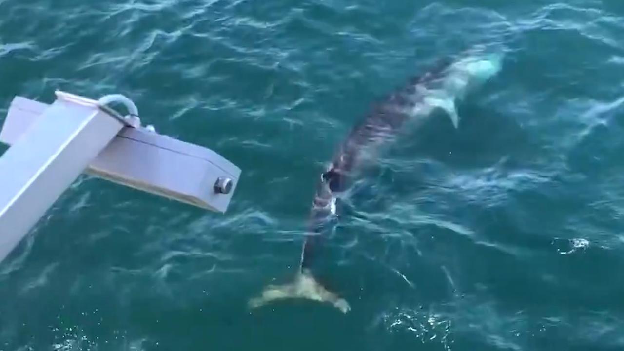 Gewone vinvis waargenomen voor kust IJmuiden