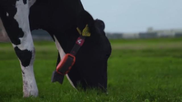 Kunstmatige intelligentie laat boeren koeien begrijpen