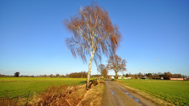 Weerbericht: Overwegend zonnig met matige, maar koude wind