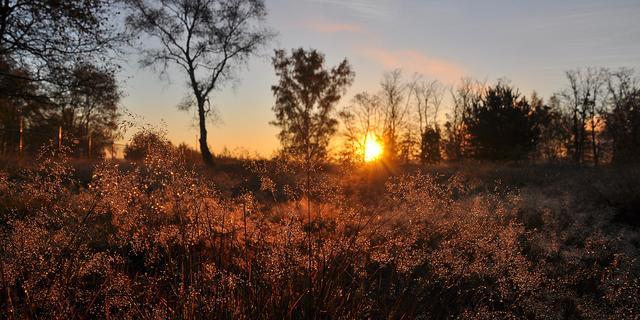Vrijdag is warmste 6 november ooit gemeten