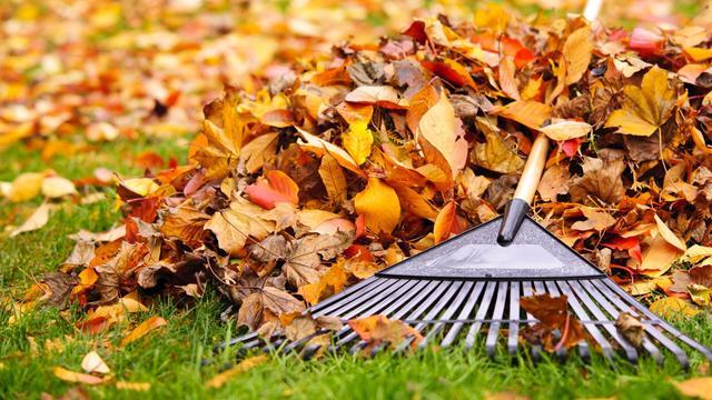 Wat je wel en juist niet moet doen om de tuin herfstklaar te maken