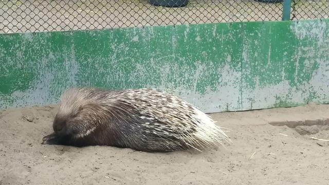 Gratis uit: Bezoek aan minidierentuin met krokodil en neusberen