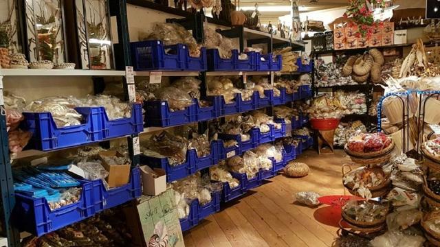 Grote hoeveelheid illegaal koraal aangetroffen in Brabantse loodsen