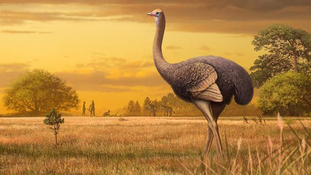 Dijbeen van grootste prehistorische vogel in Europa gevonden