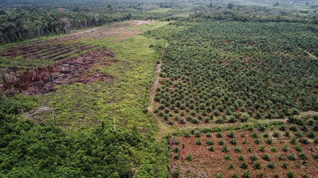 Indonesië verbiedt aanleg van nieuwe palmolieplantages voor drie jaar