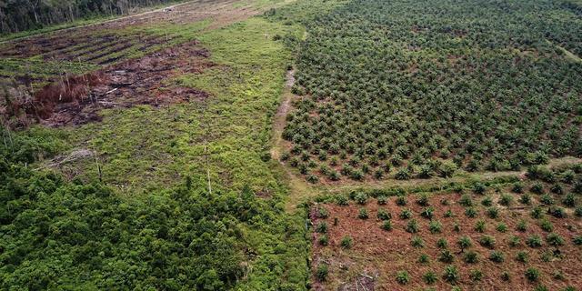 Nederlandse banken betrokken bij misstanden met palmolie