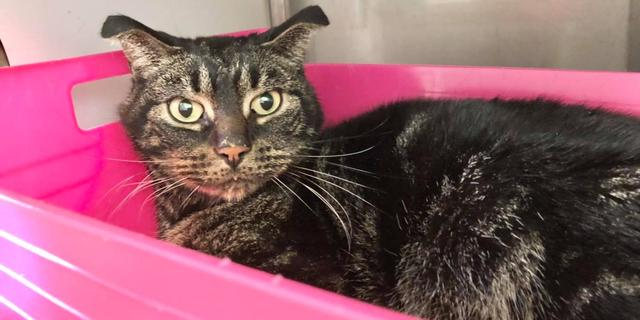 Kat overleeft 52 dagen in leegstaande woning in Schiedam