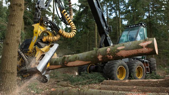 Natuurmonumenten plant na kritiek voor elke gekapte boom een nieuwe boom
