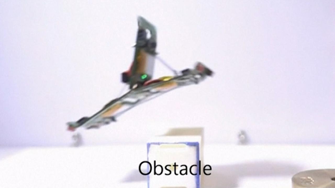 Zwitserse 'robotmieren' springen over obstakels