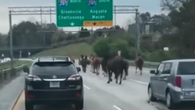 Kudde paarden rent over de snelweg in Atlanta
