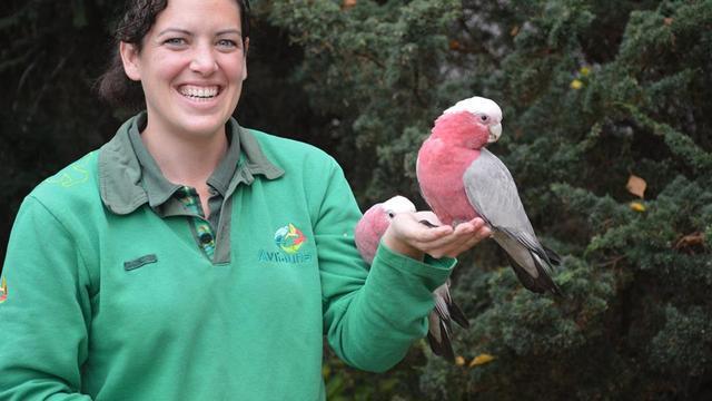 Vermiste rosé kaketoe uit vogelpark Avifauna na week teruggevonden in Utrecht