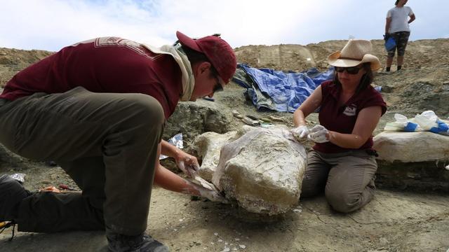 Naturalis graaft naar nieuwe dinosaurussen in Wyoming