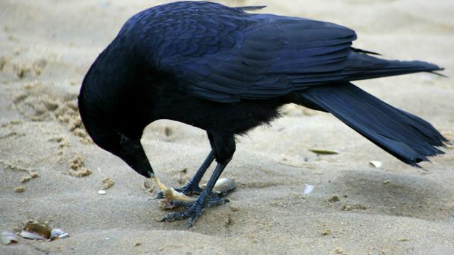 'Vogels verliezen hun angst voor afval in de stad'